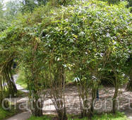 Садова альтанка з композитної стеклопластиковой арматури Polyarm