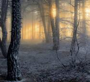 Скіналі Ліс купити в Тернополі оптом