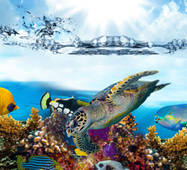 Скіналі з ефектом 3Д Риби купити в Україні