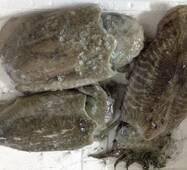 Морепродукты - Каракатица