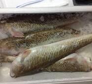 Риба охолоджена - Морський дракон 400/600