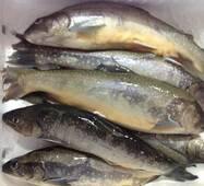 Риба охолоджена - Голець Арктичний 500 +