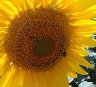 Комплекс бджолопродуктів Реабілітація після інфаркту міокарда купити в Черкасах