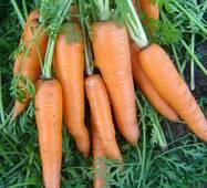 Морква Віта Лонга (дражоване за 400 нас.)