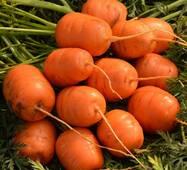 Морква Паризький ринок за 2 г