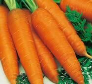Морковь Флакке (ЕМР-58) (дражированные за 400 сем.)