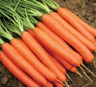 Морква Нантес (дражоване за 400 нас.)