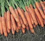 Морква Каротина (інкрустоване на водорозчинній стрічці)