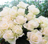 Розы Аваланж