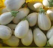 Баклажан Смак грибів (ЕБЛ-17) за 0,3 г