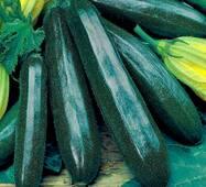 Кабачок Чорний красень цукіні (ЕКЧ-16В) за 20 г