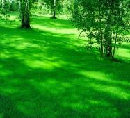 Газонна трава Універсальна (ЕГТ-4) за 50 г
