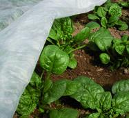 Агроволокно  укривне в рулонах (біле) 17Г/М2  (3,2 м х 50 м рулон)