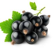 Черной смородины масло рафинированное купить в Украине