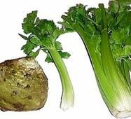 Селера органічна купити у Вінниці
