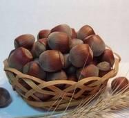 Саженцы фундука сорт Подарок Юннатом