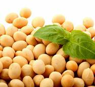 Семена сои