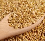 Пшениця 4 класу