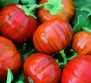 Баклажан Турецкий оранжевый (ЕБЛ-18) за 10 сем.