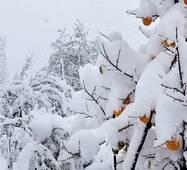 Препарат для морозостойкости деревьев