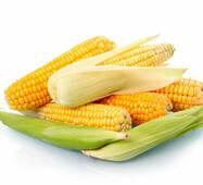 Кукуруза сахарная Юрмала (ЕКК-23А) в 200 сем.
