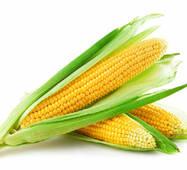 Кукуруза сахарная Веге F1 (ЕКК-14А) в 200 сем.