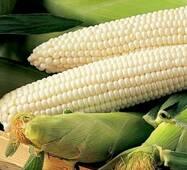 Кукуруза сахарная Андреевская F1 (ЕКК-15А) с 200 сем
