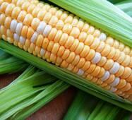 Кукуруза сахарная Мраморная F1 (ЕКК-35А) в 200 сем.
