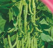 Семена фасоли вьющаяся спаржевая Фея 10 шт.