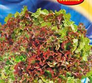 Семена салата Малиновый слой 1000 шт.