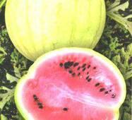 Семена арбуза Снежок