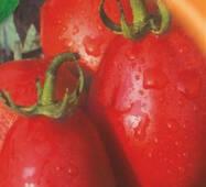 Семена томатов Лагидный 10 г