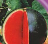 Семена арбуза Тюльпан 30 шт.