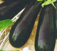 Семена баклажана Донецкий урожайный