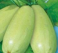 Семена кабачков Ролик