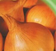 Семена лука репчатого Стригуновский 200 шт.