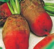 Семена свеклы кормовой Рекорд Поли 30 г