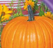 Семена тыквы Оранжевый шар 15 шт.