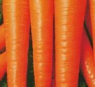 Семена моркови Витая лонга (имп)