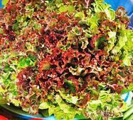 Семена салата Малиновый слой