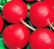 Семена редиса Корунд (имп)
