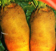Семена свеклы кормовой Урсус 300 г