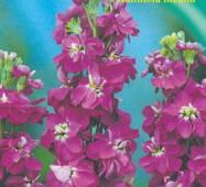 Левкой махровый фиолетовый 0,1 г