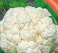 Семена капусты цветной Пионер 100 шт.