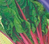 Семена свеклы Мангольд листовой  50 шт.