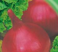Семена луки Рубин 200 шт.