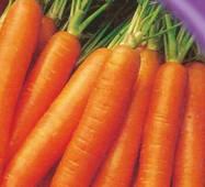 Семена моркови Форто 1000 шт.