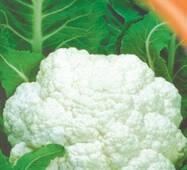 Семена капусты цветной Снежный слой 100 шт.