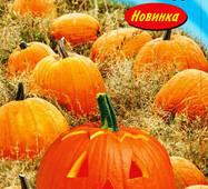 Семена тыквы Коннектикут филд (США) 15 шт.