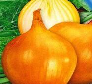 Семена луки Глобус